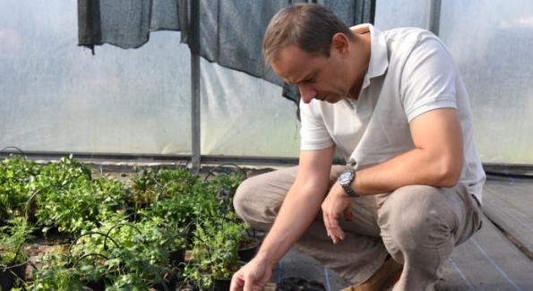 Hydrobox – rewolucja dla roślin